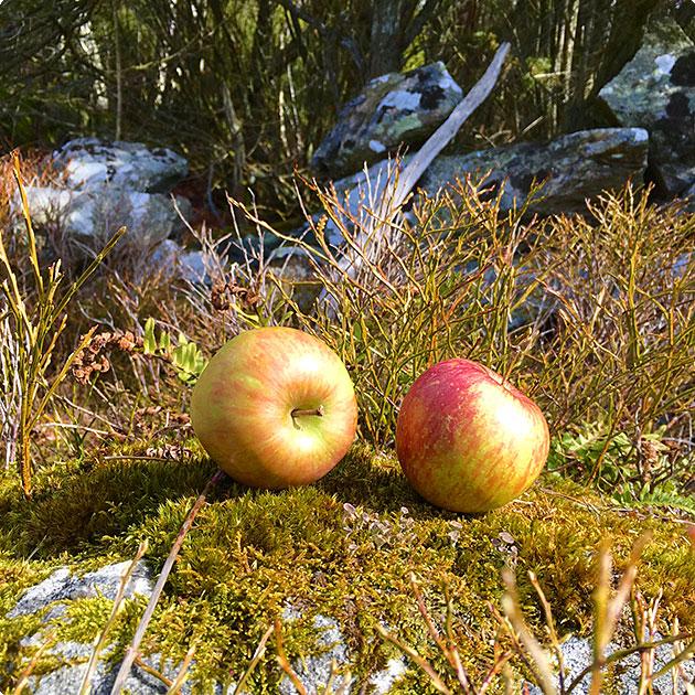 applen-i-skogen